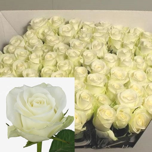 Countdown Roses 50cm - UCSFresh