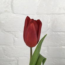 Load image into Gallery viewer, Tulip Renegade - UCSFresh