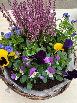 Winter Hanging Basket Kits. - UCSFresh