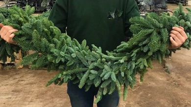 Real Pine Christmas Garlands - UCSFresh