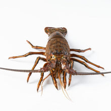 Load image into Gallery viewer, California Spiny Lobster