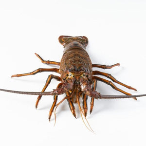 Open image in slideshow, California Spiny Lobster