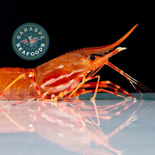 Load image into Gallery viewer, San Diego Spot Prawn Box