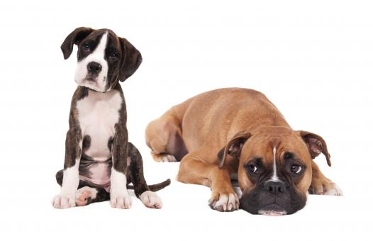 Dog Parasite Control, Supplements & Health