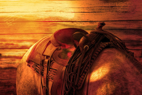 Tack Room - Saddles & Saddle Accessories