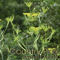 Country Park Fennel Seeds 1kg
