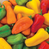 Organic Mini Sweet Peppers, Each