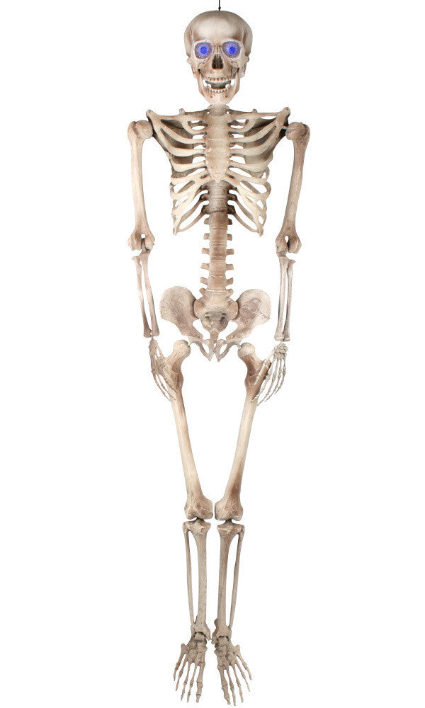 Prop - Craig the Skeleton Animated 155cm