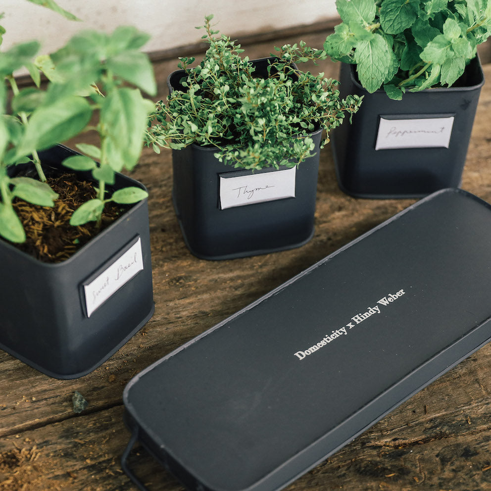 The Henrietta Culinary Herb Planters with Tray  ( Domesticity x Hindy Weber )