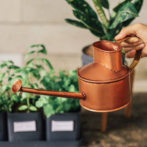 Watering Can Philippines, Plant Watering Can - Domesticity x Hindy Weber