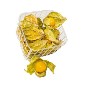 Physalis - MATHY GmbH
