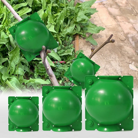 Image of Air Layer Plants, Plant Propagation, Propagation Box, Root Grafting