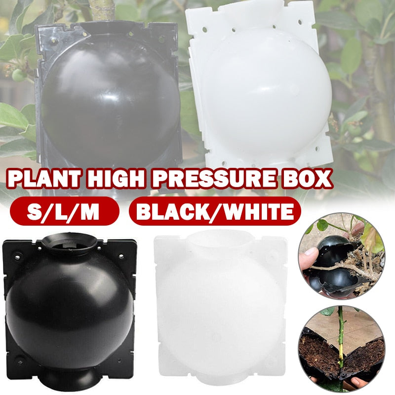 Air Layer Plants, Plant Propagation, Propagation Box, Root Grafting