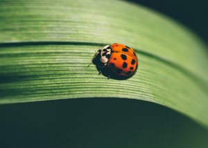 London Ladybird 001