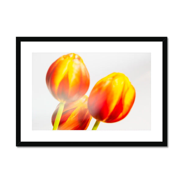 'Table Tulips (no.127)' 2020 Framed & Mounted Print