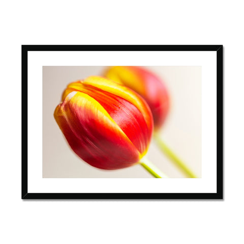 'Table Tulips (no.058' 2020 Framed & Mounted Print