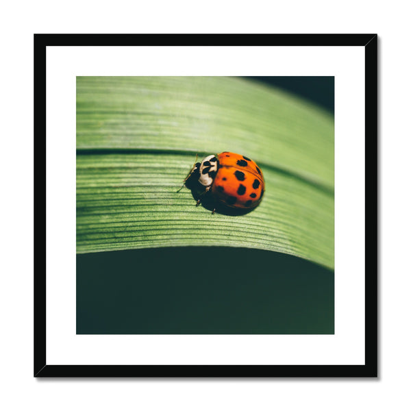London Ladybird 001 Framed & Mounted Print