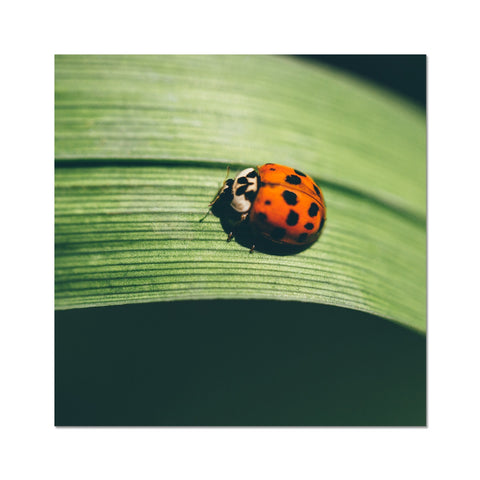 London Ladybird 001 C-Type Print