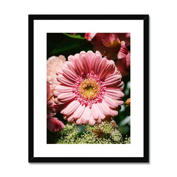 'Pink African Daisy (no.042)' 2016 Framed & Mounted Print