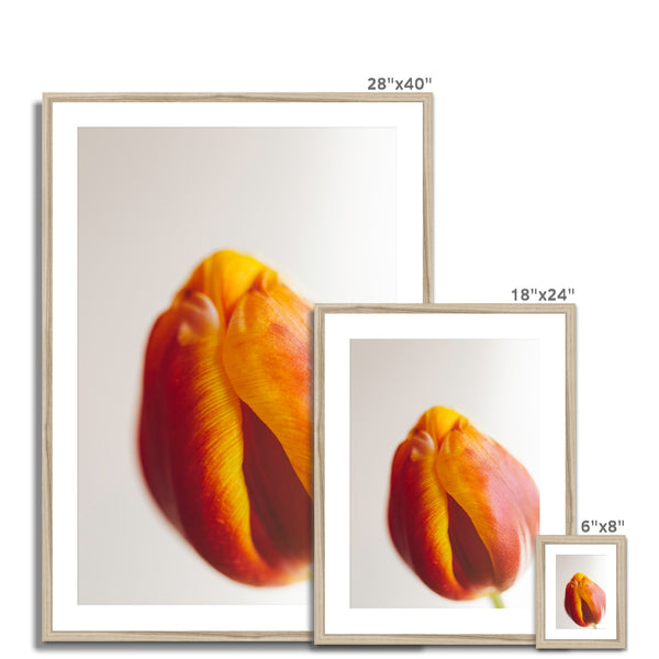 'Table Tulips (no.60)' 2020 Framed & Mounted Print