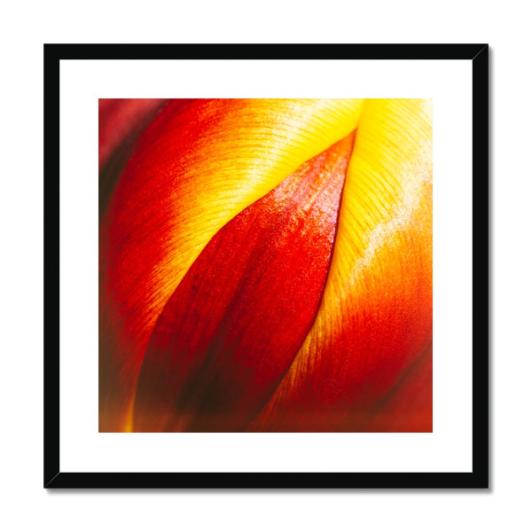 'Table Tulips (no.093)' 2020 Framed & Mounted Print