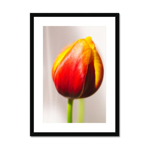 'Table Tulips (no.101)' 2020 Framed & Mounted Print
