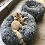 Comfortable Plush Bed