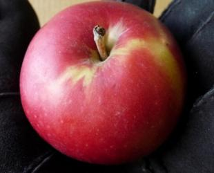 Apple Tree - Dwarf - Red Gemini