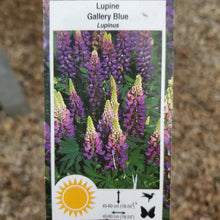 Load image into Gallery viewer, Lupinus - Lupine, Gallery Series