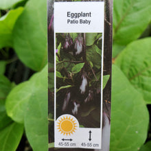 Load image into Gallery viewer, Eggplant - Patio Baby