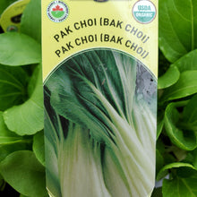 Load image into Gallery viewer, Pak Choi (Bak Choi) - Certified Organic