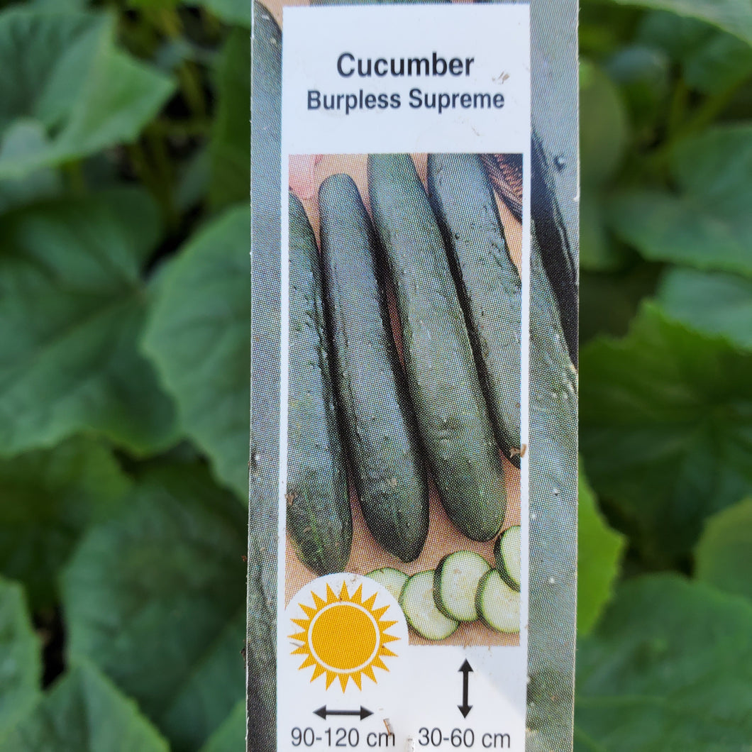 Cucumber - Burpless Supreme