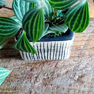 Checkered Square Pot