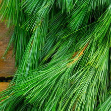 Load image into Gallery viewer, Greens - Princess Pine Bough