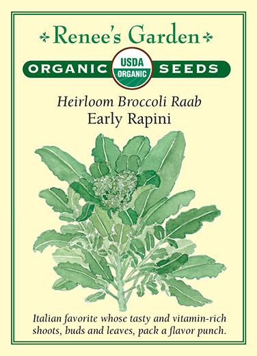 Broccoli Raab Early Rapini Organic