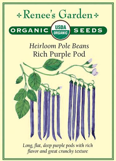 Bean Pole Rich Purple Pod Organic