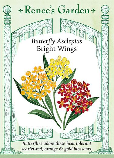 Asclepias Butterfly Milkweed Bright Wings