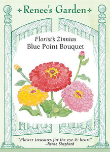Zinnia Blue Point Florist