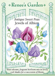 Sweet Pea Jewels of Albion Scented