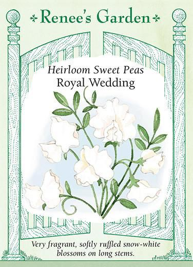 Sweet Pea Royal Wedding Scented