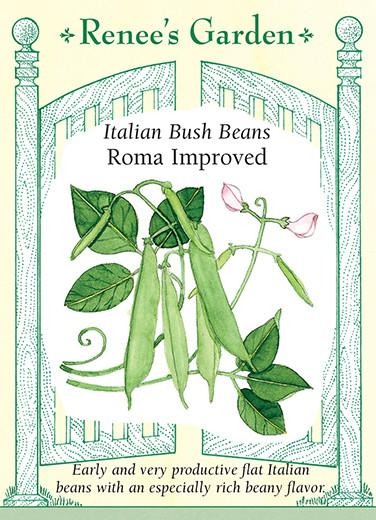 Bean Bush Roma Improved