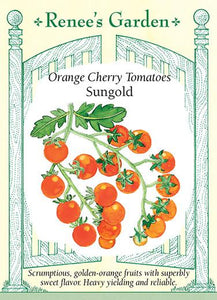 Tomato Cherry Orange Sungold