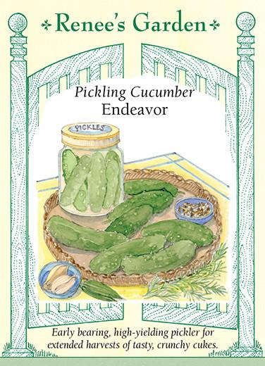 Cucumber Pickling Endeavor