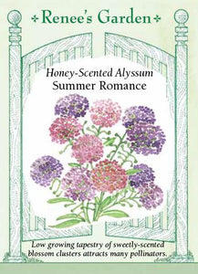 Alyssum Summer Romance Mix