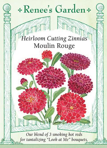 Zinnia Moulin Rouge Red Cutting