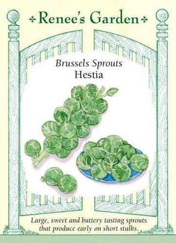 Brussels Sprouts Hestia