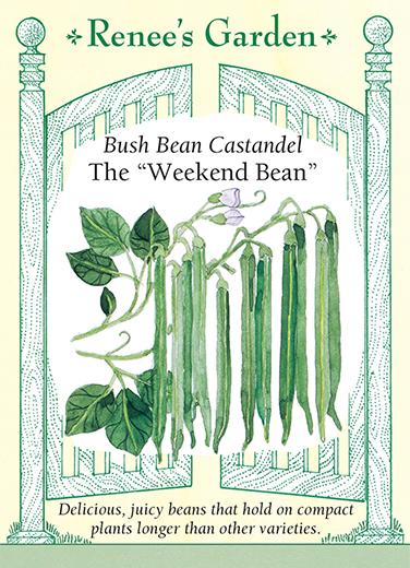 Bean Bush Container Castandel Weekend