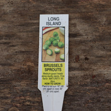 Load image into Gallery viewer, Brussel Sprouts - Long Island Green