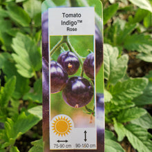 Load image into Gallery viewer, Tomato (Cherry+Salad) - Indigo Rose - Certified Organic