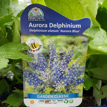 Load image into Gallery viewer, Delphinium Elatum Aurora Blue